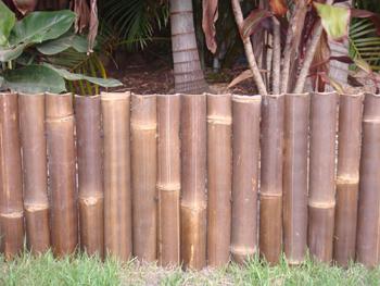 bamboo edge 1